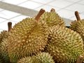 Durian in market was regarded by many people southeast asia as the king of fruits the is distinctive for its large size strong Royalty Free Stock Photography