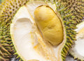 Durian ripe tropical fruit of asia Stock Image