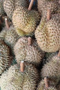 Durians alot of from utraradit thailand photo taken on july th Royalty Free Stock Photo