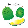 Durians vector set on white background Royalty Free Stock Photo