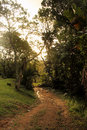 Dusk wet tropical forest picture of dirt road through Royalty Free Stock Images