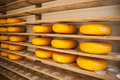Dutch cheeses Royalty Free Stock Photos