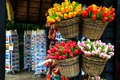 Dutch colorful wooden tulips, postcards in souvenir shop, Netherlands, Europe Royalty Free Stock Photo