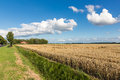 Dutch farmland with wheat field and cloudscape beautiful Stock Photos