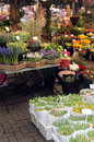 Dutch Flower Market Royalty Free Stock Photo