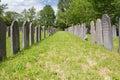 Dutch-Jewish Cemetery: main part in Diemen cemetery Royalty Free Stock Photo