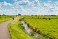 Dutch landscape with bicyclists and cows Royalty Free Stock Image