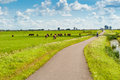 Dutch landscape with bicyclists and cows Royalty Free Stock Photography
