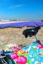 Dutch landscape with bike flower bulbs Royalty Free Stock Photo