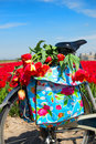 Dutch landscape with bike and flower bulbs Royalty Free Stock Photo