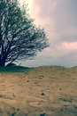 Dutch landscape cloudy with single tree and sandy ground Royalty Free Stock Photos