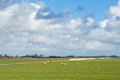 Dutch landscape typical with sheep a windmill farmland and beautiful clouds Stock Image