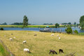 Dutch landscape with water boats and sheep Stock Photo