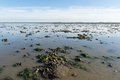 Dutch mud flats coastal feature of the Royalty Free Stock Images