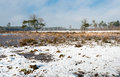 Dutch nature reserve on a harsh wintry day flat area covered with snow and ice cold in the winter season Stock Photos