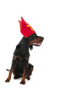Dutch Sinterklaas dog Royalty Free Stock Photos