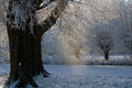 Dutch snow trees with frozen ditch and sun on snowflakes Royalty Free Stock Images