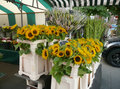 Sunflowers on the market Royalty Free Stock Photo