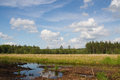 Dutch swamp landscape with blue sky Royalty Free Stock Photo