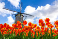 Dutch Tulip Windmill Landscape