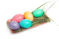 Dyed eggs in a tray easter wooden over white background with shadow Royalty Free Stock Photo