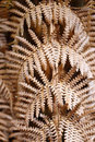 Dying fern background a british bracken back during winter Royalty Free Stock Image