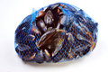 e fresh organic mussel in a blue net Royalty Free Stock Photo