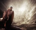 Eagle against sky sitting on a log stormy Stock Images