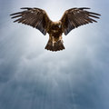 Eagle in the dark sky Royalty Free Stock Photo