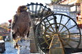 Eagle in front of Waterwheel Royalty Free Stock Photo