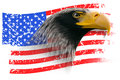 Eagle with Grunge American Flag Isolated Royalty Free Stock Photo