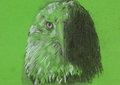 Eagle head chalk sketch hand drawn drawing of on green background Stock Images