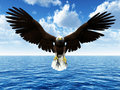 Eagle landing on ocean Stock Photography