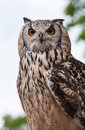 Eagle owl (Bubo bubo) Stock Photo