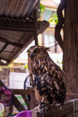 Eagle owl an eagle owl the Stock Photo