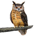 Eagle owl eurasian digital painting Royalty Free Stock Photography