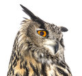 Eagle owl portrait of an Stock Image