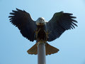 Eagle sculpture of a flying on a flagpole Stock Photography