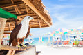 Eagle sitting at bar on beach a background of sea and sky Royalty Free Stock Photo