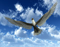 Eagle In Sky 33 Royalty Free Stock Image