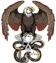 Eagle, snake and human skull. Design template Royalty Free Stock Photo