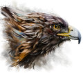 Eagle watercolor painting Royalty Free Stock Photo