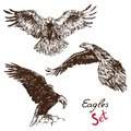 Eagles set, with inscription, hand drawn doodle