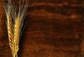 Ear of barley on wood background Royalty Free Stock Photo