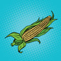 Ear of corn, harvest, agriculture Royalty Free Stock Photo