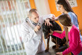Ear examination of Great Done dog in vet clinic Royalty Free Stock Photo