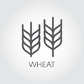 Ear of wheat outline icon. Agriculture and harvest concept. Design element for beer theme, different packaging and products. Vecto