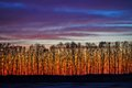 Early dusk sunset in forest landscape of or dawn Stock Photos