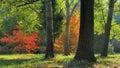 Early Fall Foliage Autumn Trees Royalty Free Stock Photo