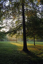 Early Fall Morning Royalty Free Stock Photo